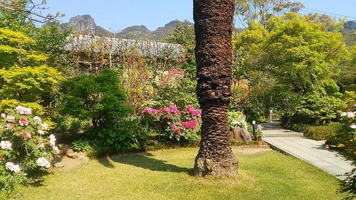牡丹の庭_0434.jpg